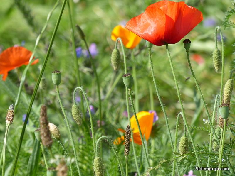 Scottish Parliament Wild Flowers
