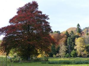 dunkeld, trees, 2edinburgh