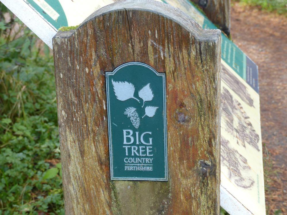 Big Tree Marker