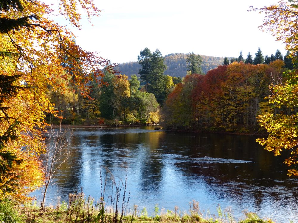 Autumn on the banks of the river Tay