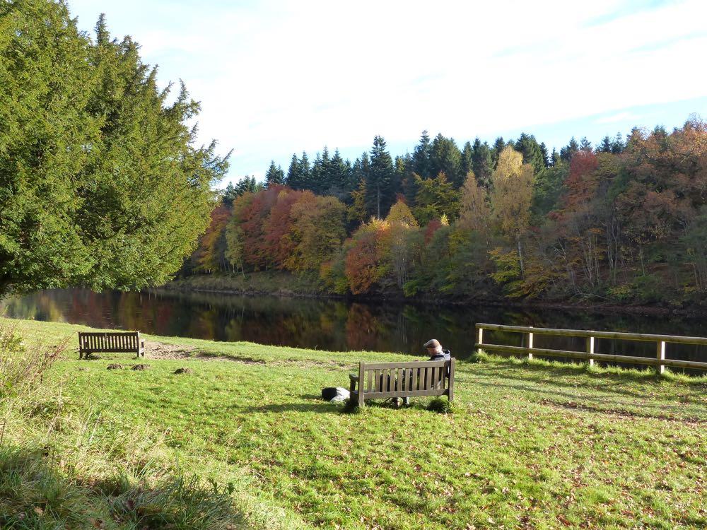 Dunkeld Big Tree Country Autumn-10