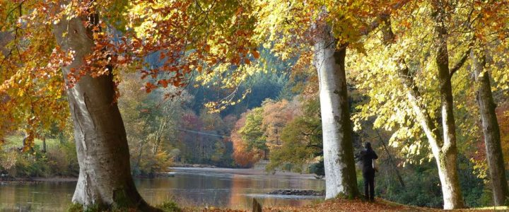 Dunkeld – Big Tree Country Autumn Day Trip from Edinburgh