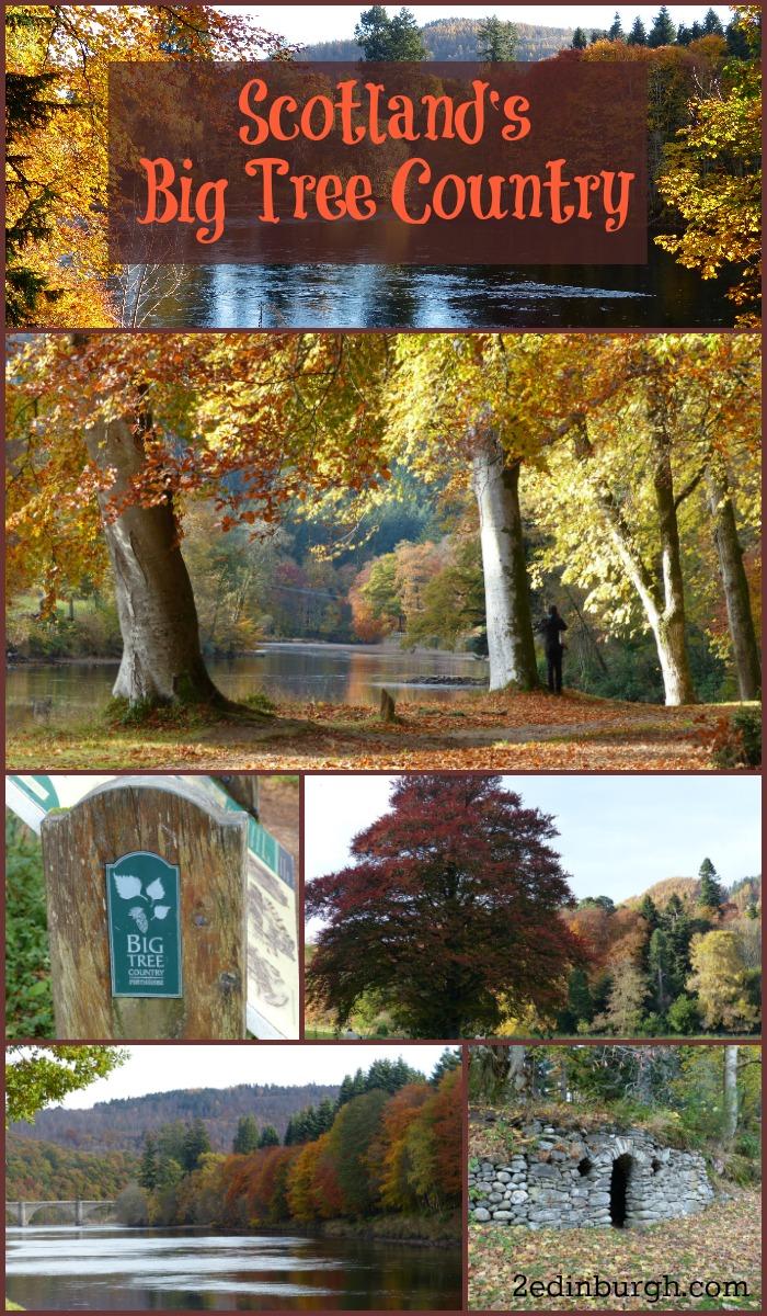 scotland big tree country